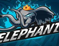 Втор трофеј за Team Elephant за помалку од еден месец